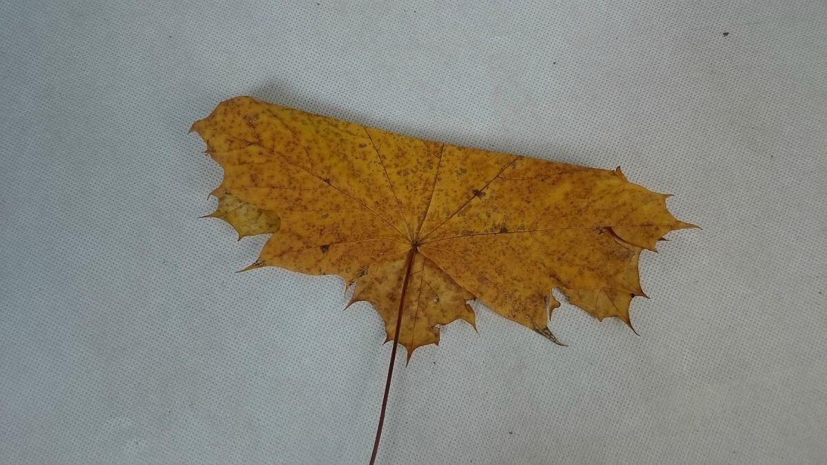 KROK I - Składanie jesiennego liścia